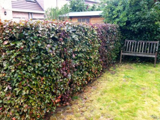 Haies for Entretien jardin wemmel