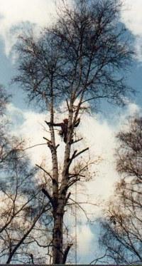 betula-xavier-2.jpg