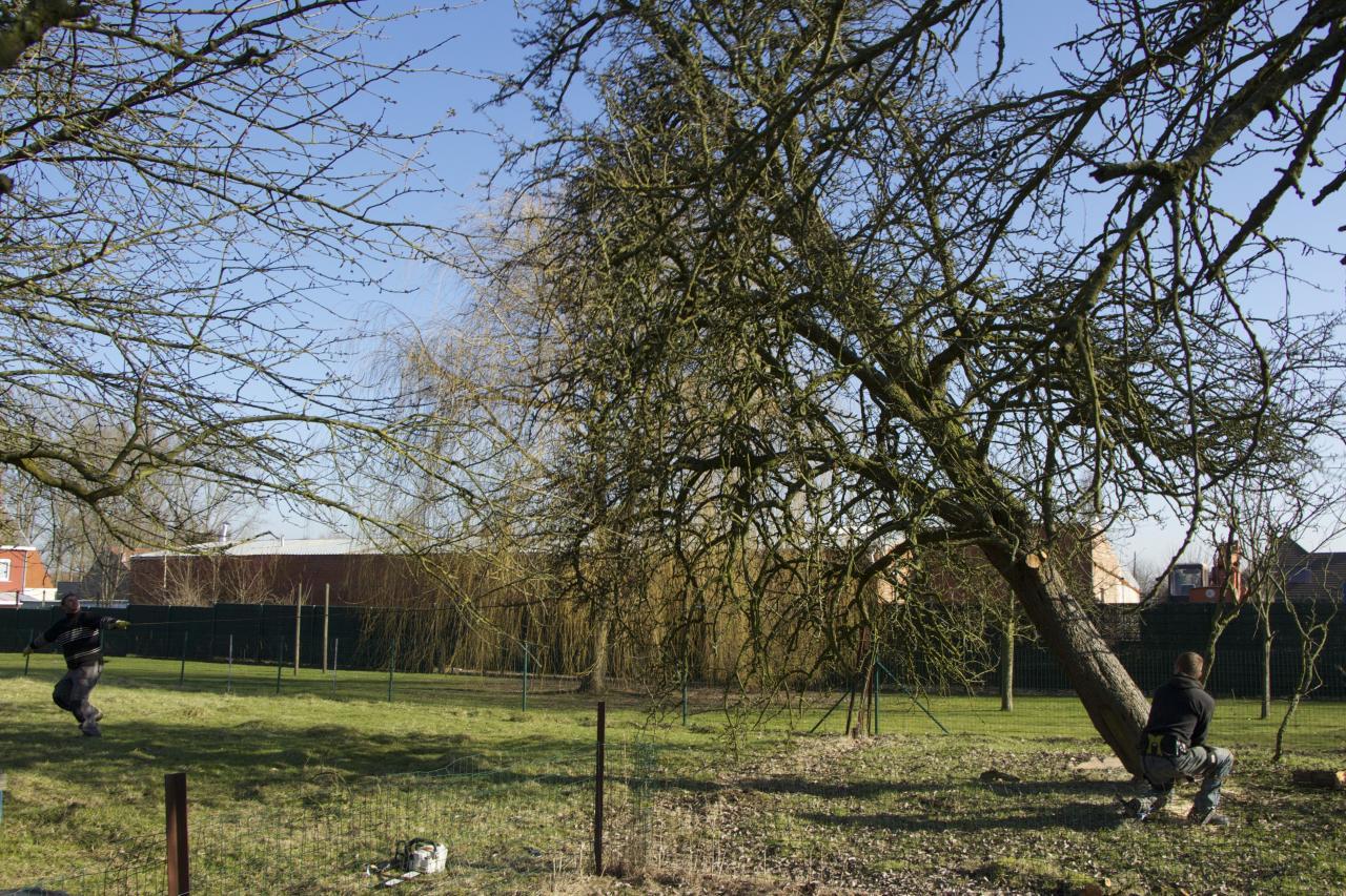 entreprise d 39 lagage et abattage d 39 arbre taille haie. Black Bedroom Furniture Sets. Home Design Ideas